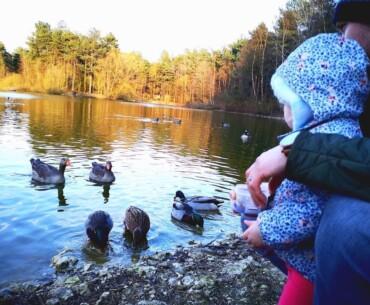 Elveden Forest - Feeding the Ducks