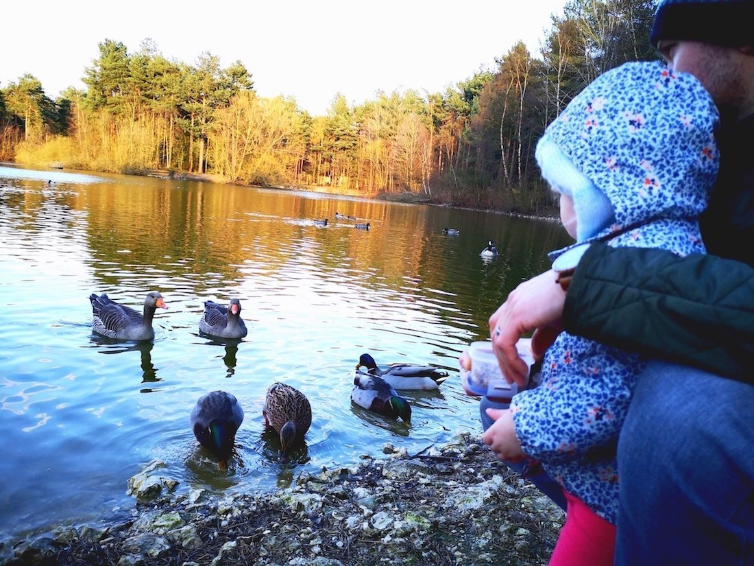 Center Parcs Elveden reviews. Image shows a toddler feeding the ducks