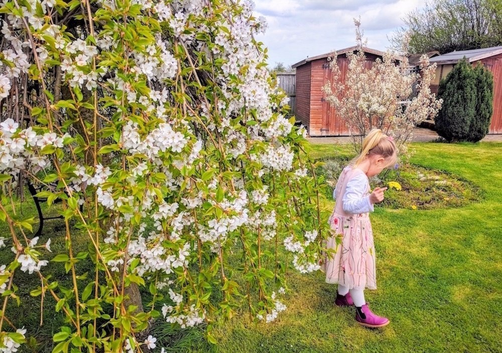 How to Create the Perfect Family Garden - Child Playing Under Tree Blossom