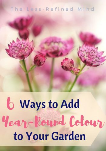 Check out how to add year-round colour to your garden with these handy tips and tricks. #garden #gardeninspo #gardeninspiration