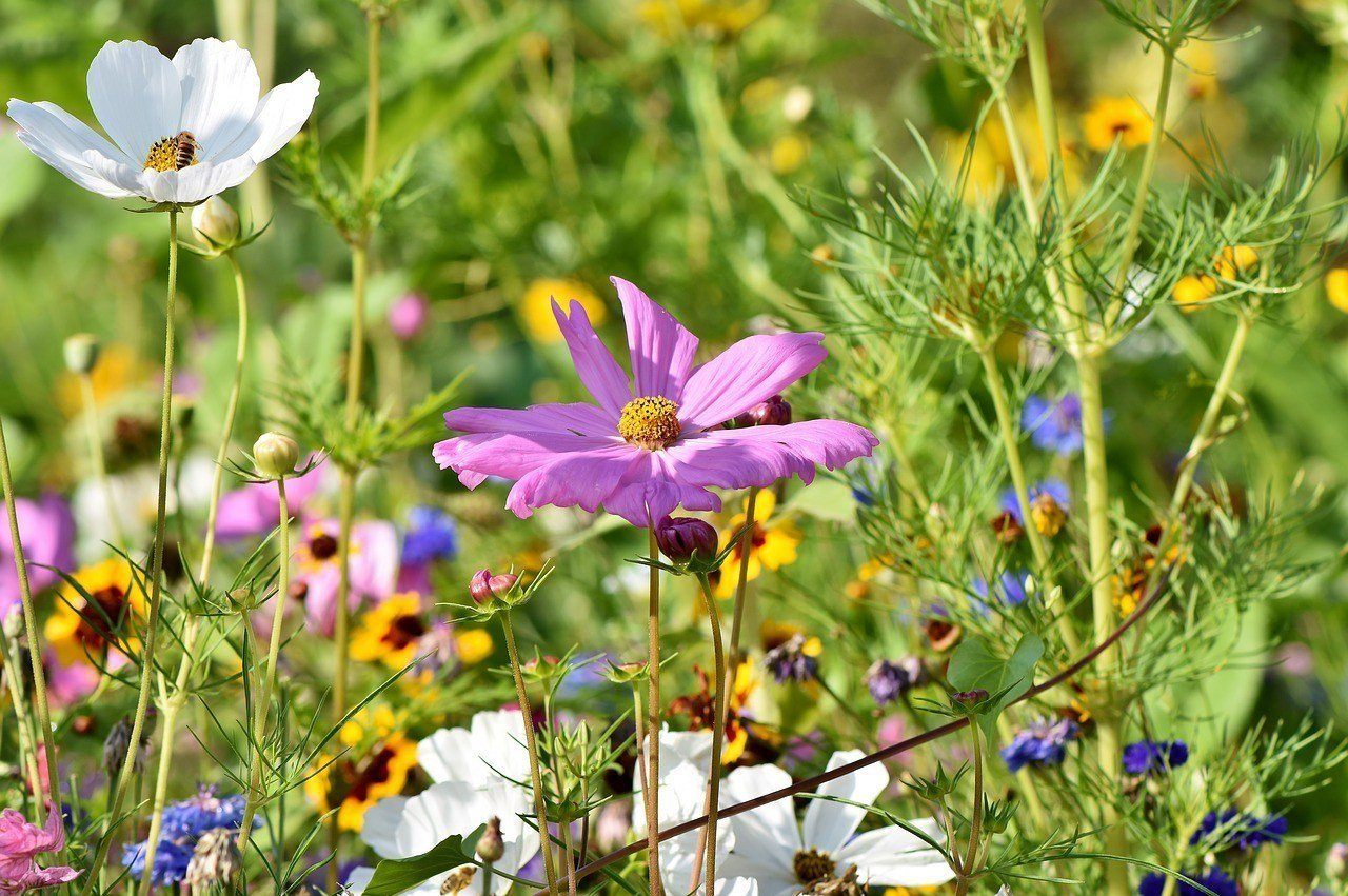 How to Add Year-Round Colour to Your Garden - Wild Flowers