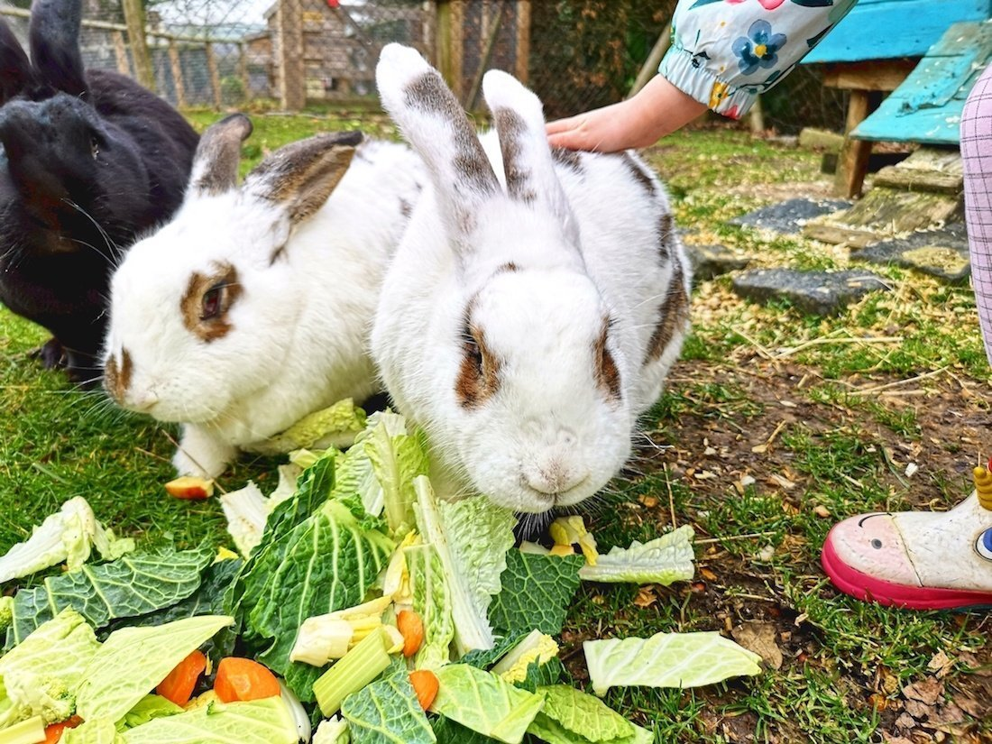 Lee Valley Park Farms Review - Giant Rabbits