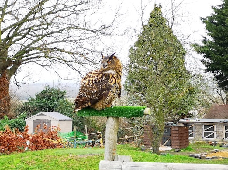 Lee Valley Park Farms Review - Giant Owl