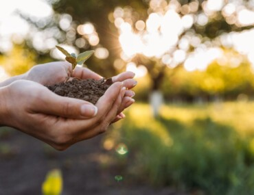 Biodegradable vs Compostable - Seedling