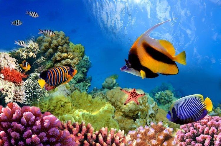 Gerat Barrier Reef