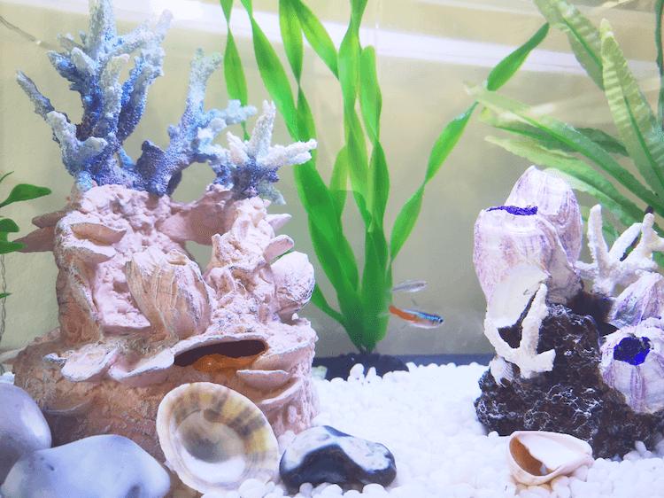 Fish Tank Decorations and Fish