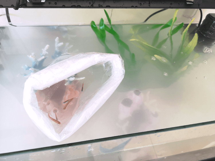 Floating New Fish in Tank