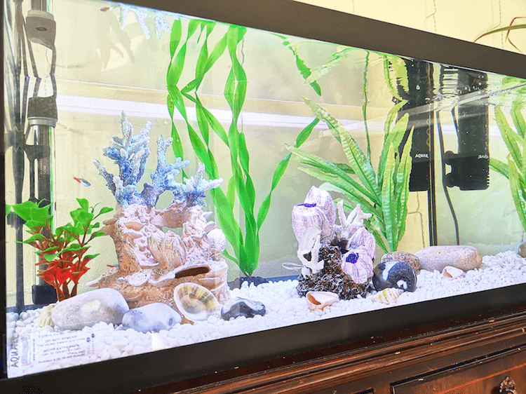 Setting Up a Tropical Fish Tank