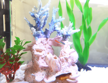 What Temperature Should a Tropical Fish Tank Be