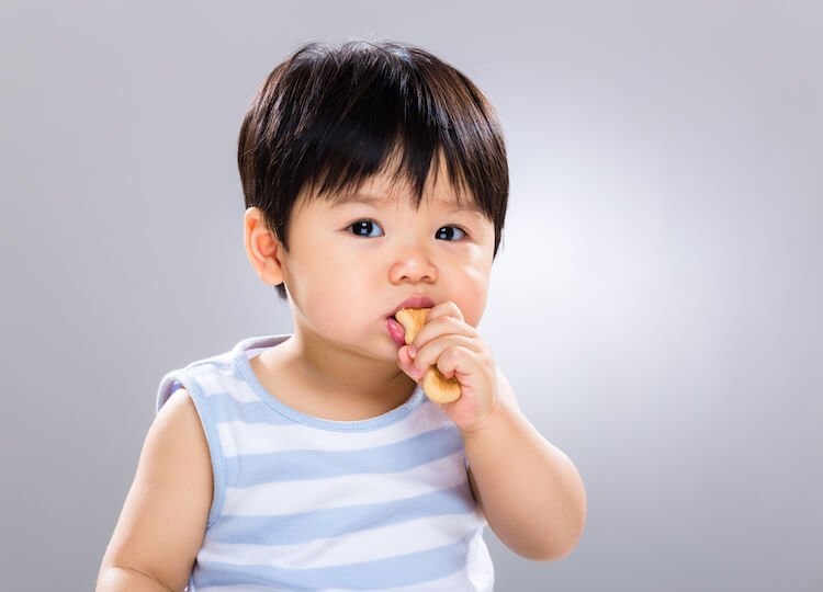 Baby eating a biscuit.