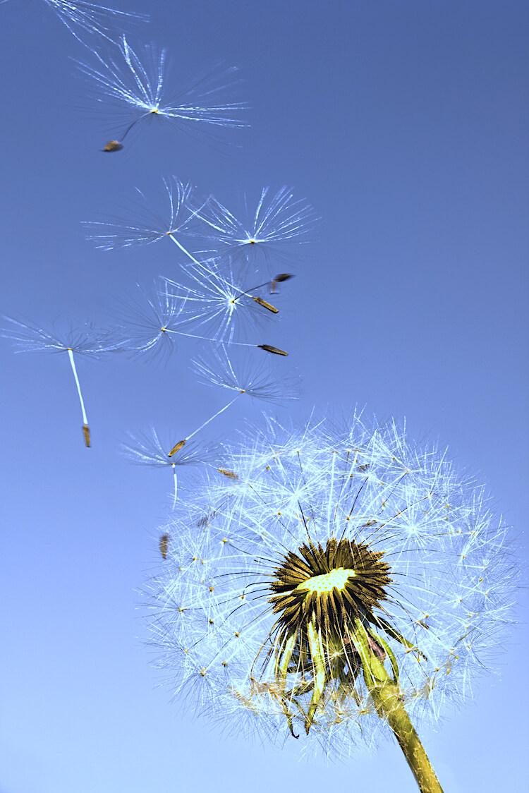 Positive affirmations for women   Image shows dandelion seeds dispersing into a blue sky.