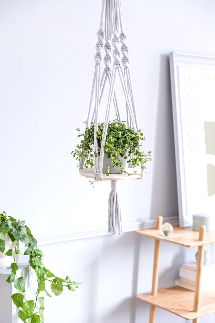 Image shows a plant being held in a macrame hanging basket. There's a wooden table in the background.